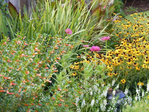 Garden close up